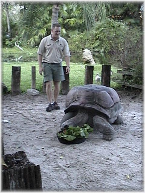 Aldabra Giant Tortoise picture