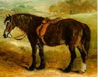 Welsh Pony and Cob picture
